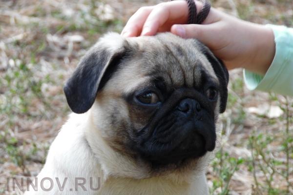 В России могут ввести нормативы жилплощади для кошек и собак