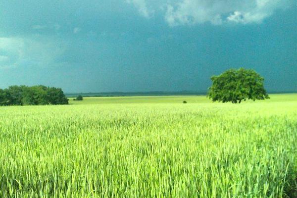 Владельцы дальневосточных гектаров могут не надеяться на строительство дорог к их наделам