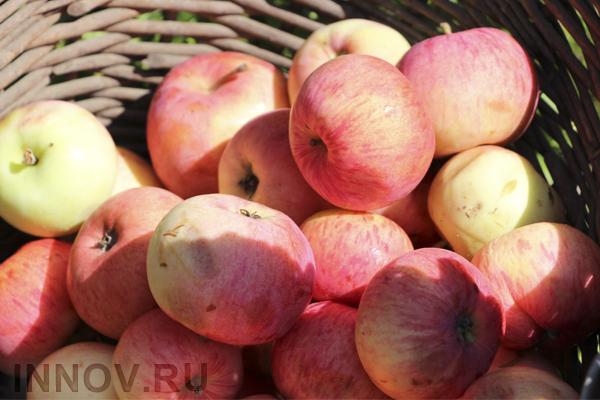 Учёные: одно яблоко в день снижает риск ранней смерти