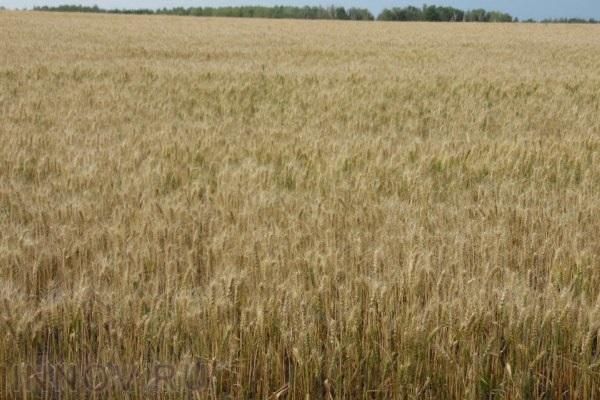 Госдума приняла закон о раздаче бесплатных гектаров на Дальнем Востоке